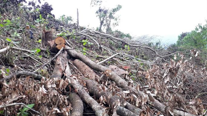 Trầy trật thu hồi đất rừng - Ảnh 1.