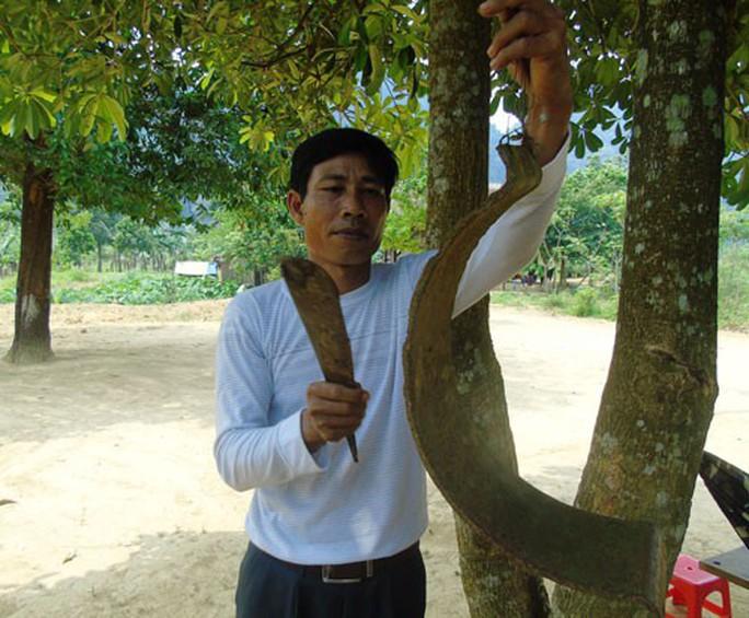 Hạnh phúc của người thầy: Gieo chữ dưới cánh rừng - Ảnh 1.