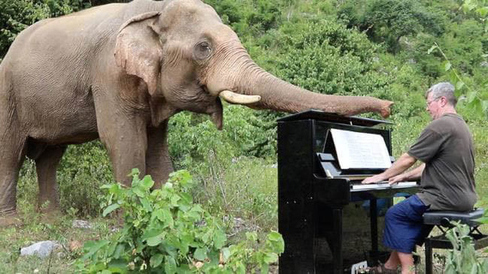 Chơi đàn cho voi - Ảnh 1.