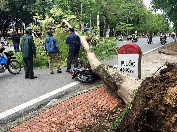Cây xanh bật gốc, ngã đè xe máy người đi đường - Ảnh 1.