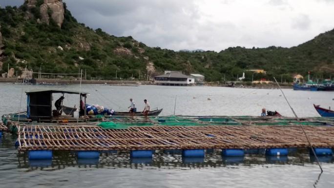 Ninh Thuận tất bật ứng phó với bão số 9 - Ảnh 5.