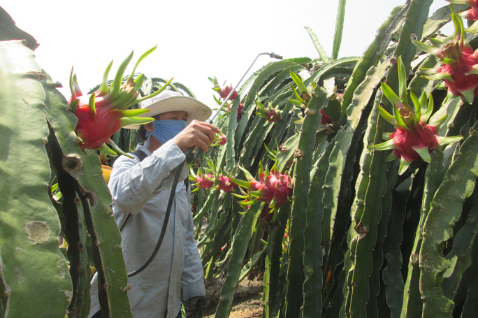 Bảo vệ môi trường cho nông sản sạch - Ảnh 1.