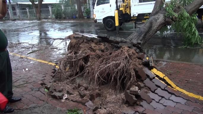 Ảnh hưởng bão số 9, Cần Giờ mưa lớn, cây xanh bật gốc, nhà tốc mái - Ảnh 12.