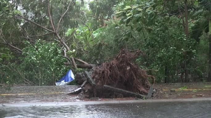 Ảnh hưởng bão số 9, Cần Giờ mưa lớn, cây xanh bật gốc, nhà tốc mái - Ảnh 16.