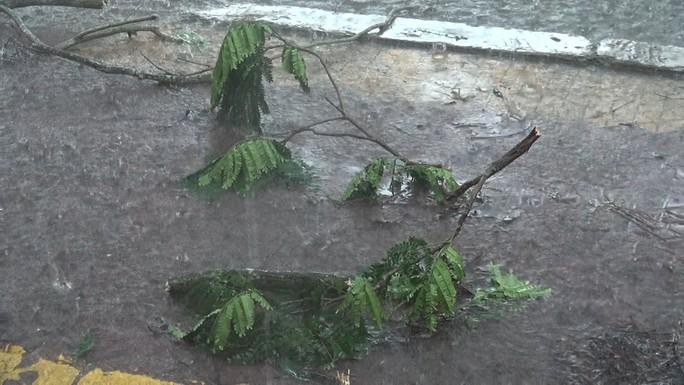 Ảnh hưởng bão số 9, Cần Giờ mưa lớn, cây xanh bật gốc, nhà tốc mái - Ảnh 3.
