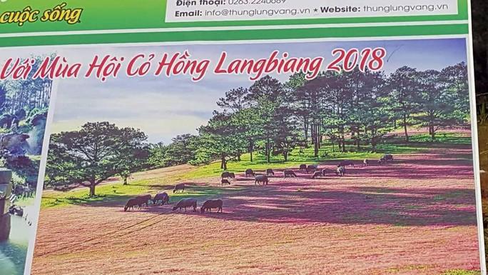 """Ban tổ chức Mùa hội cỏ hồng Langbiang bị tố """"xài chùa"""" hình ảnh - Ảnh 1."""