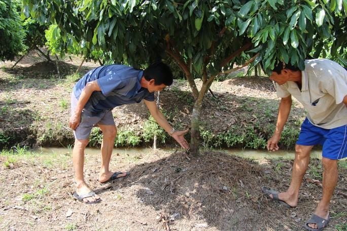 Vườn cây ăn trái liên tiếp bị kẻ xấu phá hoại tàn độc - Ảnh 1.
