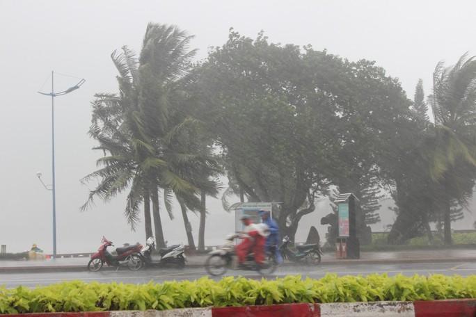 Bão số 9 đã vào Bà Rịa - Vũng Tàu, mưa rất to, cây ngã đổ, tàu chìm - Ảnh 2.