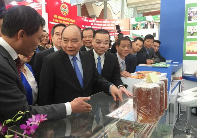 Thủ tướng Nguyễn Xuân Phúc khen ngợi bưởi Phúc Trạch - Ảnh 1.