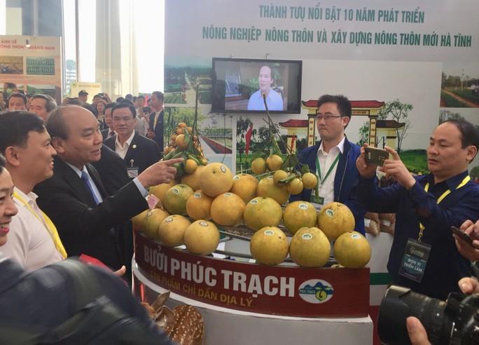 Thủ tướng Nguyễn Xuân Phúc khen ngợi bưởi Phúc Trạch - Ảnh 2.