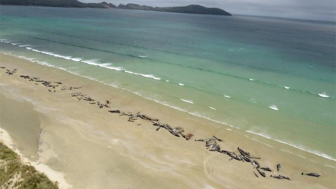 Nước mắt 145 con cá voi chết trên bờ biển New Zealand - Ảnh 5.