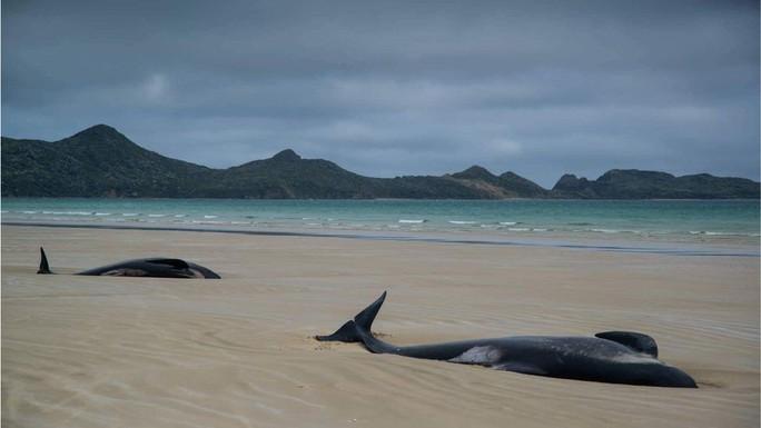 Nước mắt 145 con cá voi chết trên bờ biển New Zealand - Ảnh 6.