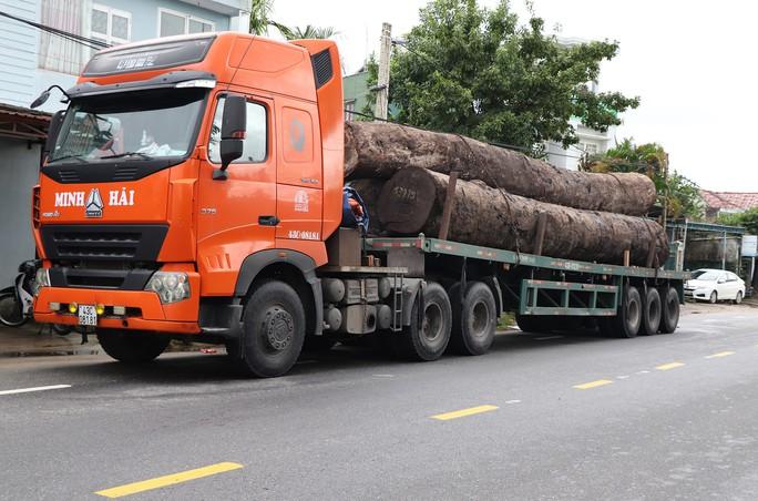 Không có giấy tờ, 4 xe container chở cả trăm mét khối gỗ khủng bị bắt giữ - Ảnh 2.