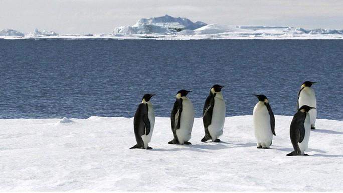 Đáng lo số phận Nam Cực - Ảnh 1.