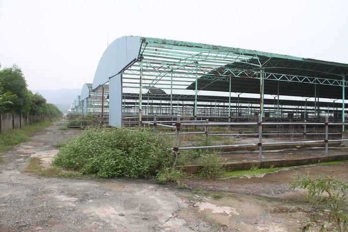 """Cận cảnh trại nuôi bò ngàn tỉ """"bỏ hoang"""" có liên quan đến ông Trần Bắc Hà - Ảnh 3."""