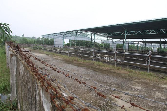 """Cận cảnh trại nuôi bò ngàn tỉ """"bỏ hoang"""" có liên quan đến ông Trần Bắc Hà - Ảnh 6."""