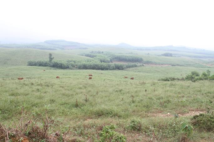 """Cận cảnh trại nuôi bò ngàn tỉ """"bỏ hoang"""" có liên quan đến ông Trần Bắc Hà - Ảnh 10."""