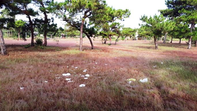 Trước ngày lễ hội, đồi cỏ hồng bị bôi bẩn bởi rác thải, kim tiêm - Ảnh 2.