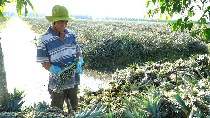 Giảm chi phí logistics, nông sản Việt cất cánh - Ảnh 2.