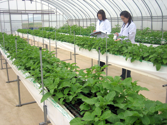 Đối tượng nào được sang Hàn Quốc làm việc ở lĩnh vực nông nghiệp - Ảnh 2.