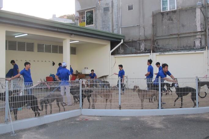 Trung tâm huấn luyện chó đua SES nhận kỷ lục Guinness Việt Nam - Ảnh 4.