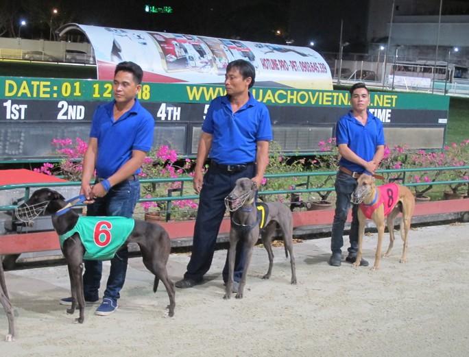 Trung tâm huấn luyện chó đua SES nhận kỷ lục Guinness Việt Nam - Ảnh 1.