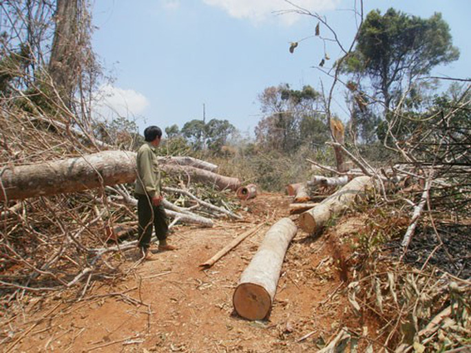 Cơ cực phận đời di cư: Lấn chiếm đất rừng - Ảnh 1.
