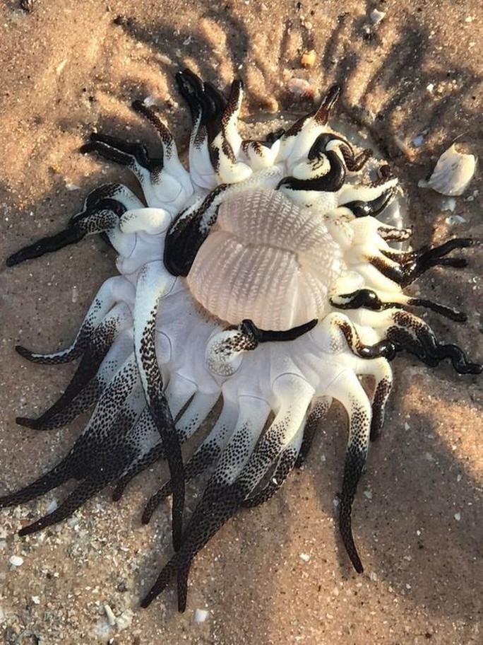 Hoang mang vì sinh vật bí ẩn dạt vào bờ biển Úc - Ảnh 1.