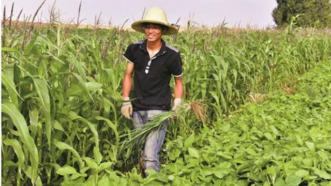 Tiến sĩ rủ nhau về quê làm nông nghiệp organic - Ảnh 1.