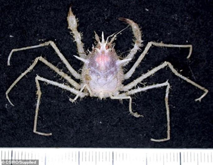 Sững sờ trước 100 loài không tên dưới đáy biển sâu - Ảnh 7.