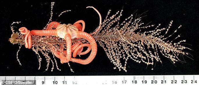 Sững sờ trước 100 loài không tên dưới đáy biển sâu - Ảnh 4.