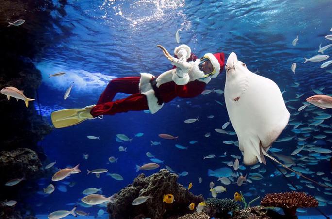 Cận cảnh Giáng sinh rộn ràng khắp thế giới - Ảnh 15.