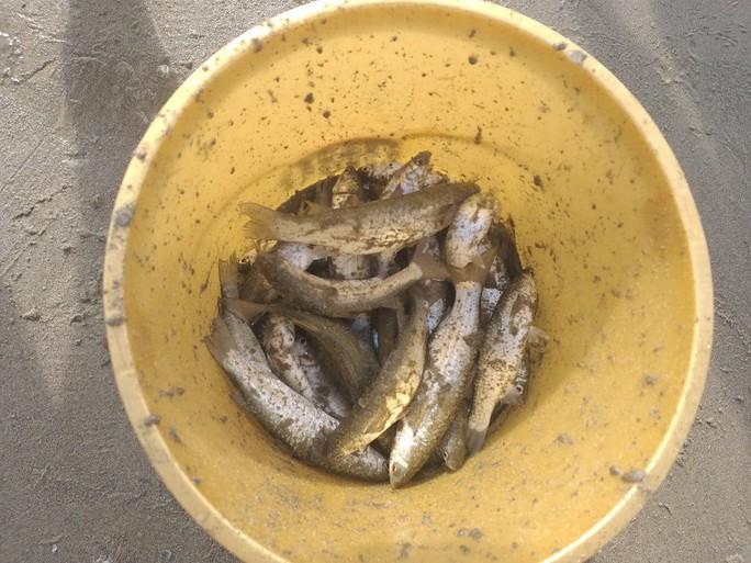 Ngợp với cảnh đầy ắp cá đối áp sát bờ biển Đà Nẵng - Ảnh 4.