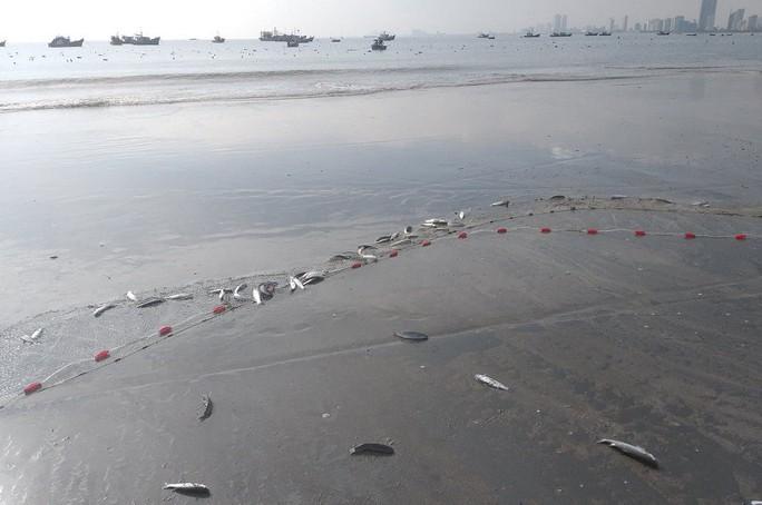 Ngợp với cảnh đầy ắp cá đối áp sát bờ biển Đà Nẵng - Ảnh 1.