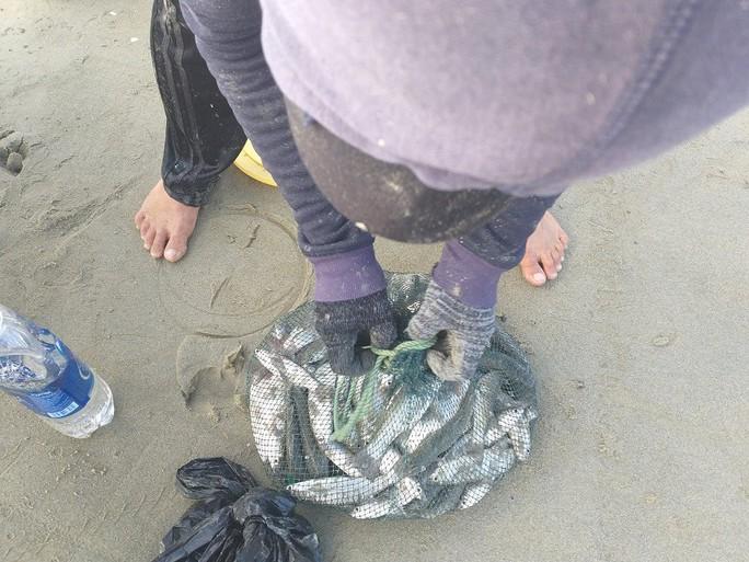 Ngợp với cảnh đầy ắp cá đối áp sát bờ biển Đà Nẵng - Ảnh 3.