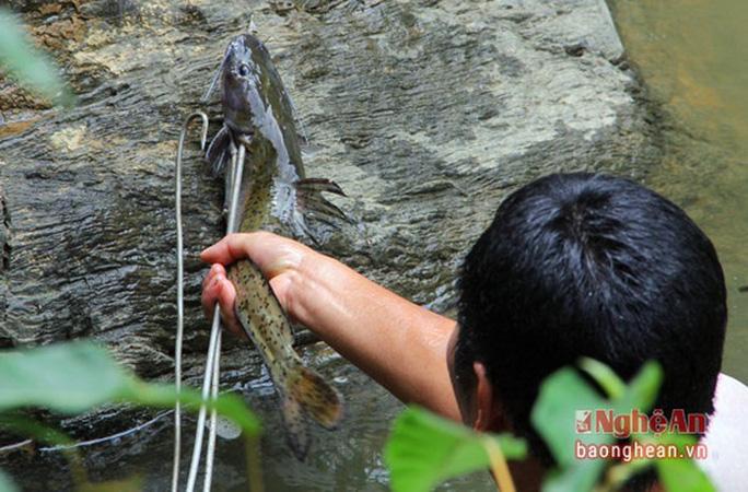 Bí ẩn miền Tây xứ Nghệ: Loài cá nặng hàng yến, dài cả mét - Ảnh 20.