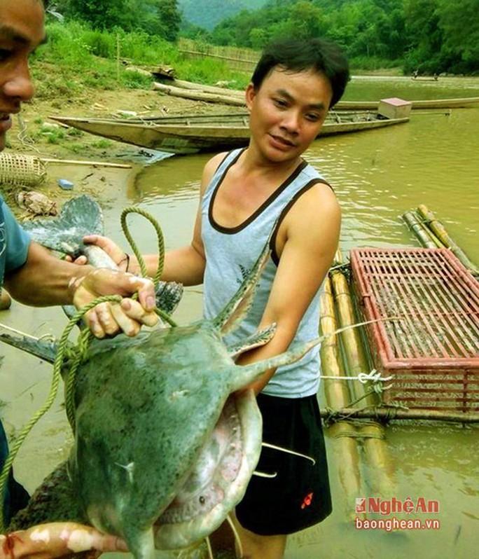 Bí ẩn miền Tây xứ Nghệ: Loài cá nặng hàng yến, dài cả mét - Ảnh 23.