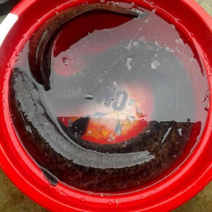 Bí ẩn miền Tây xứ Nghệ: Loài cá nặng hàng yến, dài cả mét - Ảnh 6.