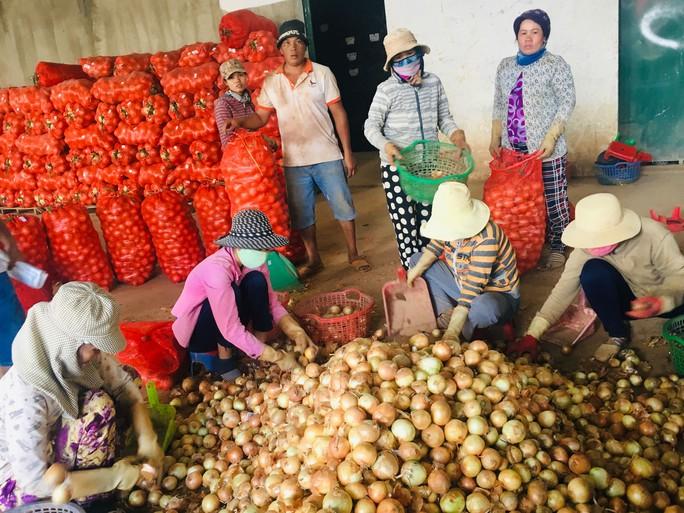 Nông dân tỉnh Lâm Đồng kỳ vọng vào mùa Tết - Ảnh 1.
