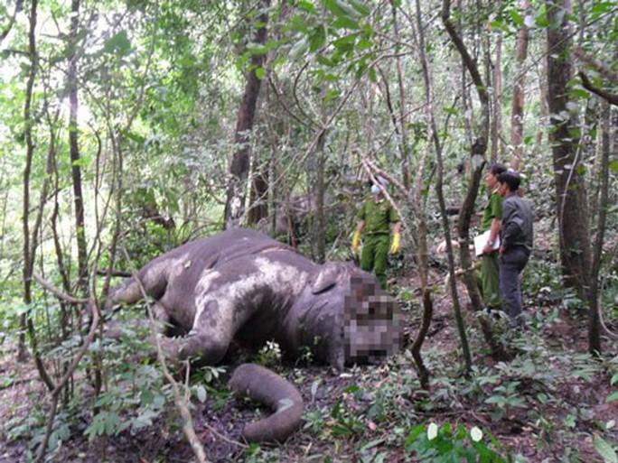 Nhiều loài thú rừng Tây Nguyên đã tuyệt chủng - Ảnh 1.