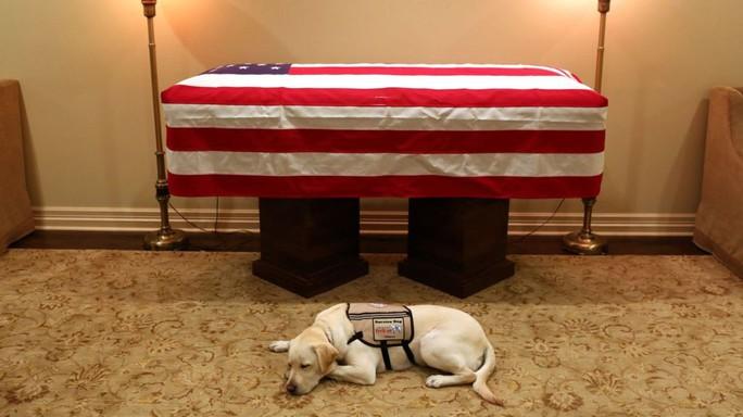"""Chuyện xúc động về chó cưng của cố Tổng thống Bush """"cha"""" - Ảnh 1."""