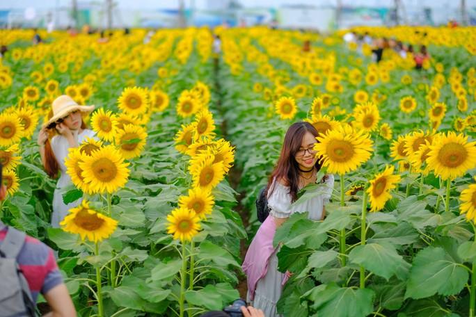 [VIDEO] - Nườm nượp đi xem cánh đồng hoa hướng dương ven sông Sài Gòn - Ảnh 13.