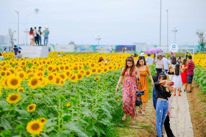 [VIDEO] - Nườm nượp đi xem cánh đồng hoa hướng dương ven sông Sài Gòn - Ảnh 5.