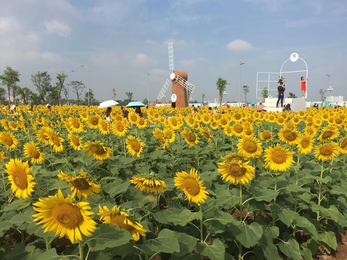 [VIDEO] - Nườm nượp đi xem cánh đồng hoa hướng dương ven sông Sài Gòn - Ảnh 15.