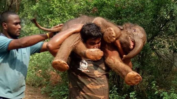 Tâm sự người vác voi - Ảnh 1.