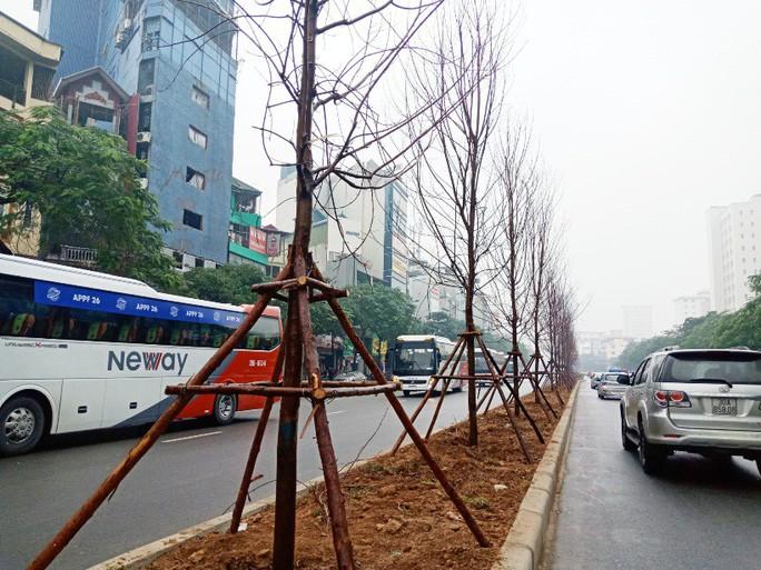 Hàng trăm cây phong lá đỏ được trồng giữa Thủ đô - Ảnh 2.