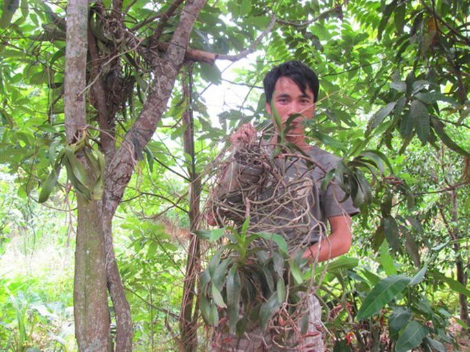 Sởn gai ốc thấy cảnh đạp rừng săn lan hiếm bán Tết - Ảnh 1.