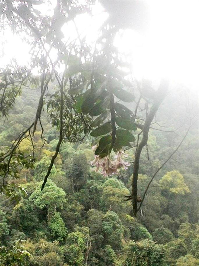 Sởn gai ốc thấy cảnh đạp rừng săn lan hiếm bán Tết - Ảnh 3.