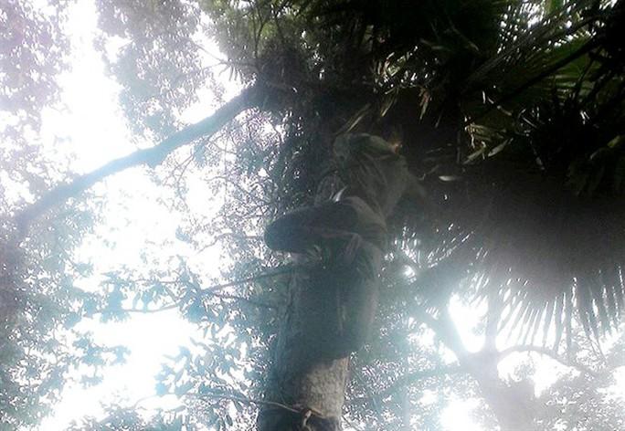 Sởn gai ốc thấy cảnh đạp rừng săn lan hiếm bán Tết - Ảnh 4.