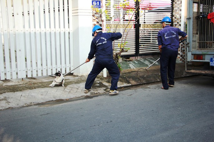 Biệt đội săn chó thả rông ở Sài thành - Ảnh 3.